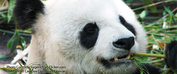 How to recover from Google's Panda Update