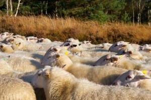 Follow the herd
